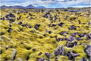 Lava stones with moss in Iceland