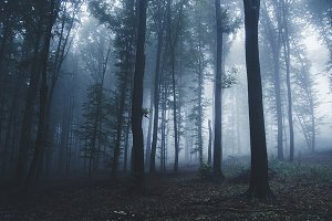 Mysterious blue forest background