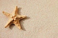 Sandy background with starfish