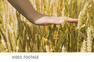 Woman touching ripe wheat