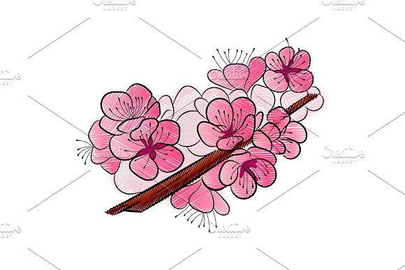 Sakura. A curved branch with delicate flowers and cherry buds.