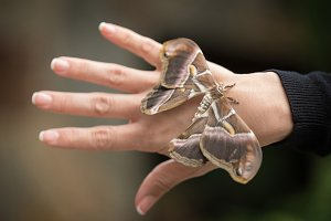 tropical butterfly on woman hand.