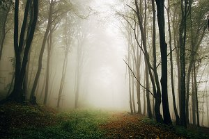 Mysterious foggy forest background