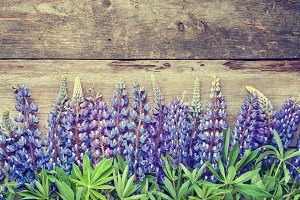 Blue lupines on wooden board.