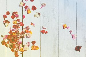 rose petals on a wooden background