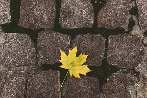 Yellow leaf on the stones