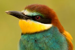 Portrait of a colorful bird