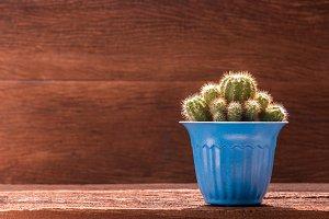 blue cactus pot