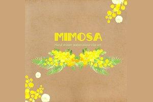 Mimosa  Watercolor Clip Art