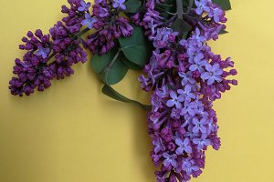 Lilacs bunch on soft background