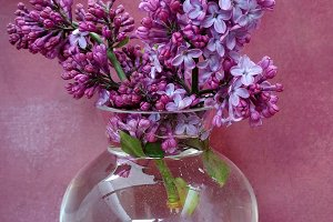 Vase with lilacs bunch