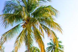 Palm trees on white sand beach.