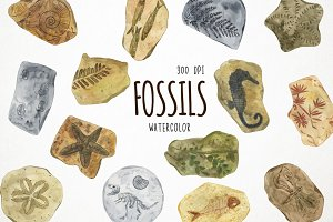 Watercolor Fossils Clipart