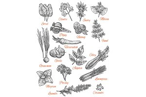 Spices store vector sketch icons of herbs