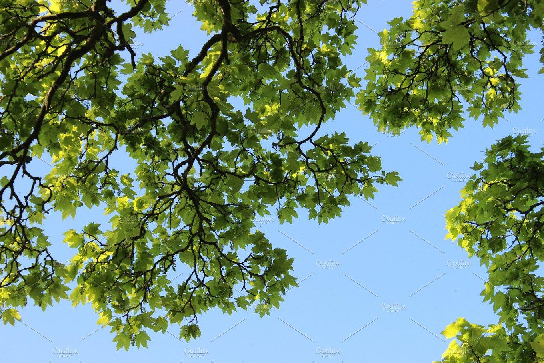 nature spring green tree - photo #8