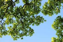 Spring Tree Branch Green Leaves