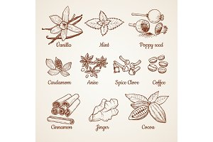 Cinnamon, chocolate, lemon and other kitchen herbs. Hand drawn illustrations