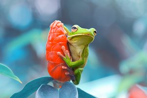 tree frog on the leaf