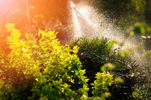 Watering plants in the garden