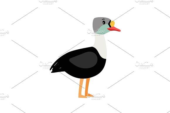 Eider Cute Cartoon Bird