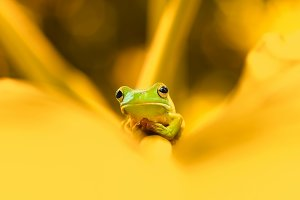 tree frog on the leaves, frog,