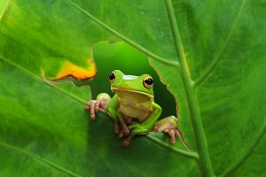 tree frog on the leaves