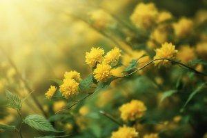 Summer yellow flowers