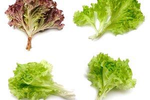 Set of lettuce leaf