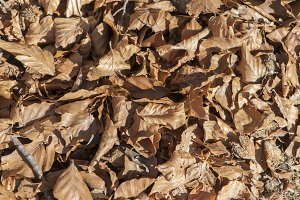 fallen leaves of trees