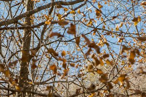 leaves on the trees in autumn