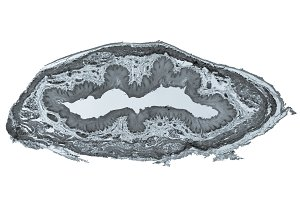 Epithelium micrograph