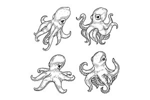 Set of isolated cartoon baby or kid octopus or squid