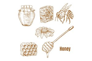 Sketches of bee and sunflower, honey spoon