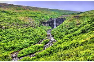 View of Svartifoss meaning Black Falls, Iceland