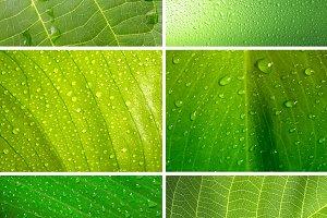set of leaf background