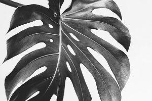 Monstera palm leave featuring background, beach, and botanical