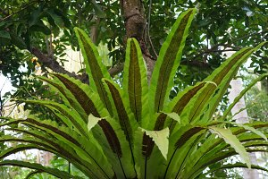 Green Plant in the Rainforest.