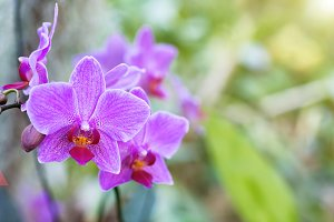 Purple orchids in tropical forest