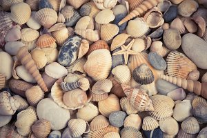 Sea shells background.