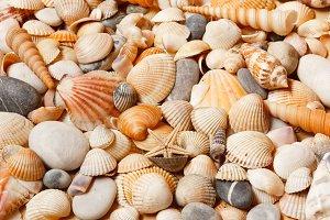 Sea shells background.