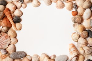 Sea Shell background with space for text