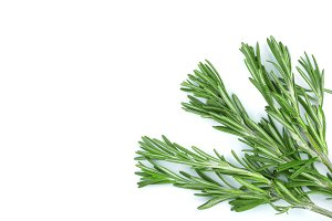 Fresh green rosemary isolated on a white background with copy space for your text. Top view. Flat lay