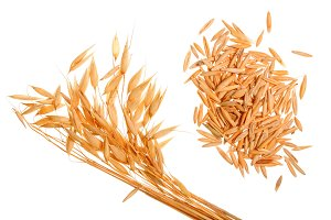 oat spike with grains isolated on white background