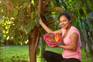 Young latino girl in cacao harvest