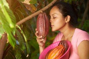 Farmer checking cacao plant