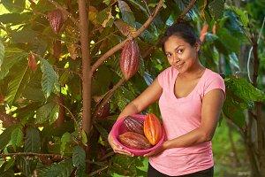 Raw cacao fruit harvest theme