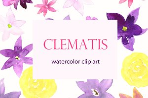 Clematis Purple. Watercolor clip art