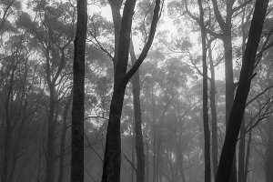Mist surrounding the trees