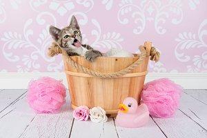 Kitten wash