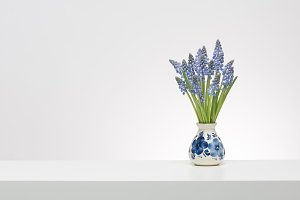 Bouquet of blue small grape hyacinth